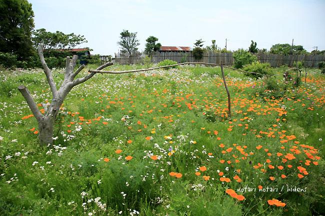 Cafe de Daraの庭