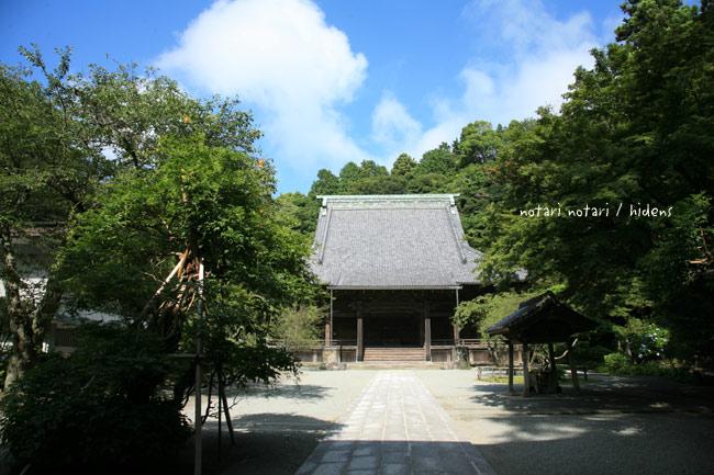 鎌倉妙本寺 ノウゼンカヅラ