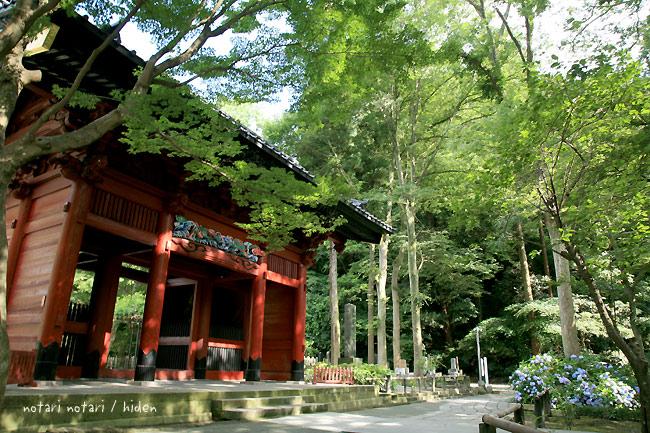 鎌倉妙本寺 紫陽花