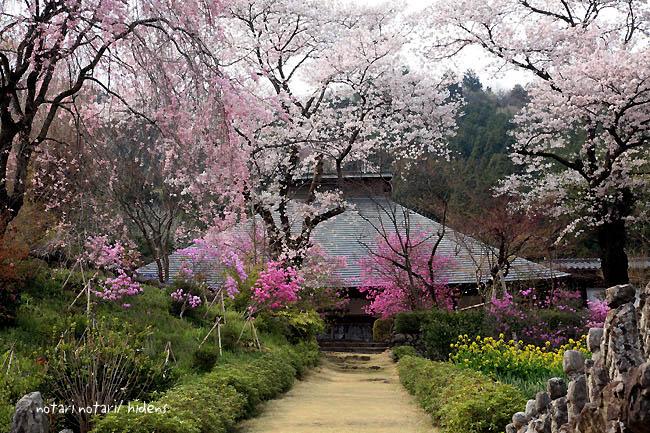 龍珠院 しだれ桜