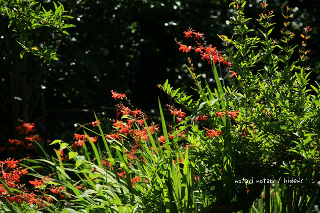 光則寺の花